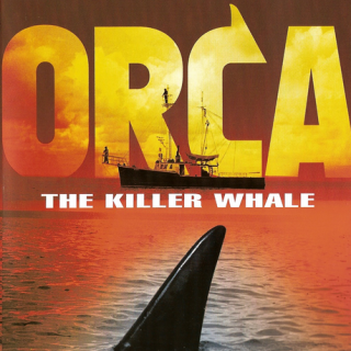 Ocra the killer whale